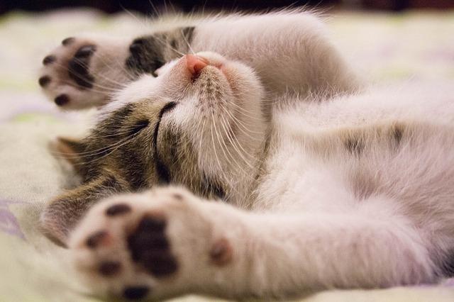koťátko na zádech