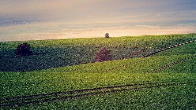 velká pole